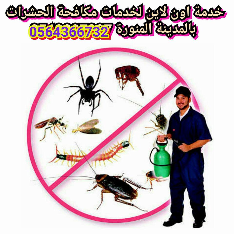 شركة مكافحة حشرات بالمدينة المنورة ، ابادة لجميع انواع فصائل الحشرات