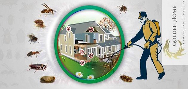 شركة مكافحة حشرات ببدر