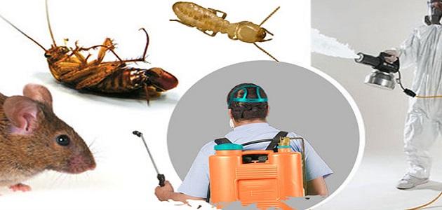 شركة مكافحة حشرات بمهد الذهب